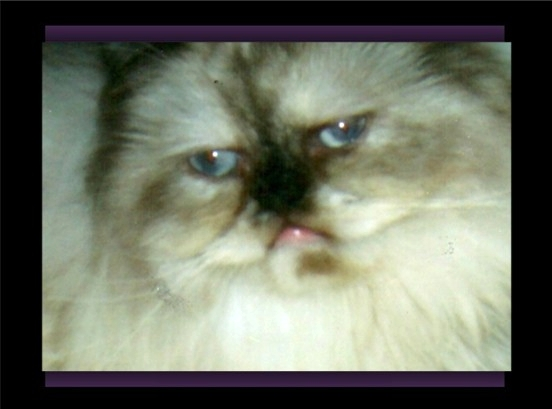 Click on BonBon's photo to view her pedigree!