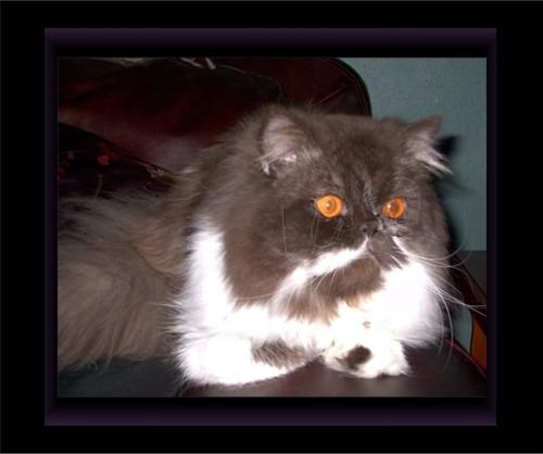 Click on Martini's photo to view his pedigree!